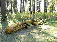 резьба по дереву, корнепластика